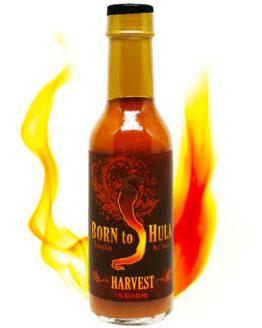 Born To Hula Harvest Pumpkin Pie